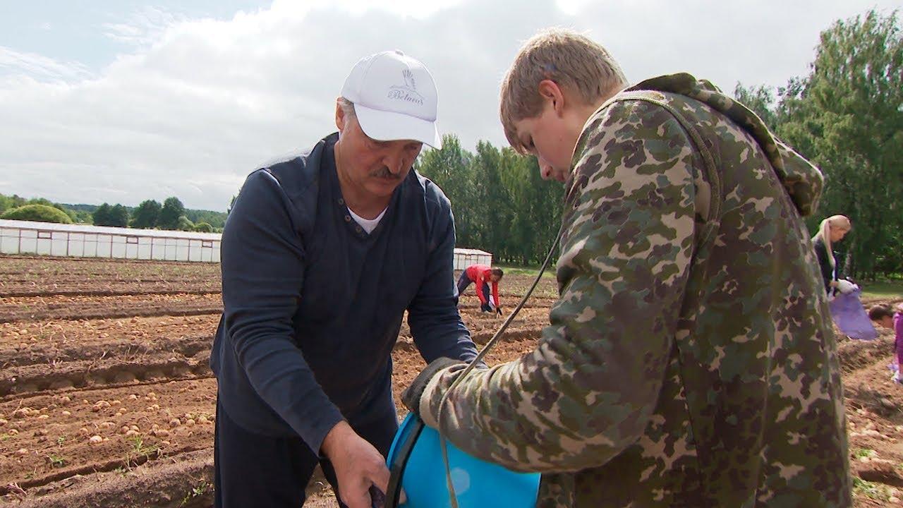 Лукашенко в субботу копал картошку с младшим сыном