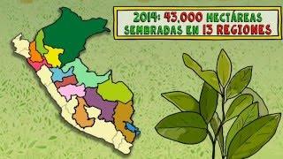 El narcotráfico en Perú