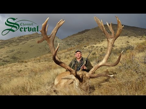 Red Deer - Hunting in New Zealand