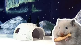 Hamster Igloo House - Hamster at the North Pole