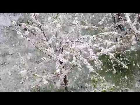 Bitlis'e Nisan Karı