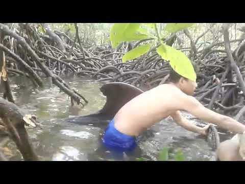 Viral,, Ikan Paus Masuk Ke Sungai