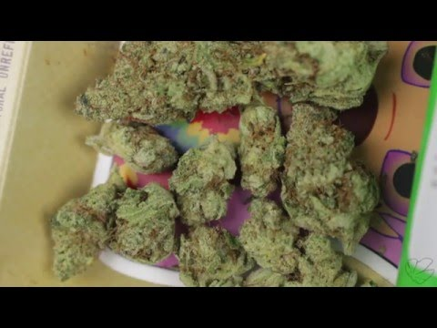 10 Different Strains of Hash and Buds - DISPENSARY HAUL