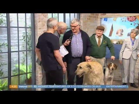 Irish Native Dog Breeds - 'Ireland AM'  - 14th March 2019