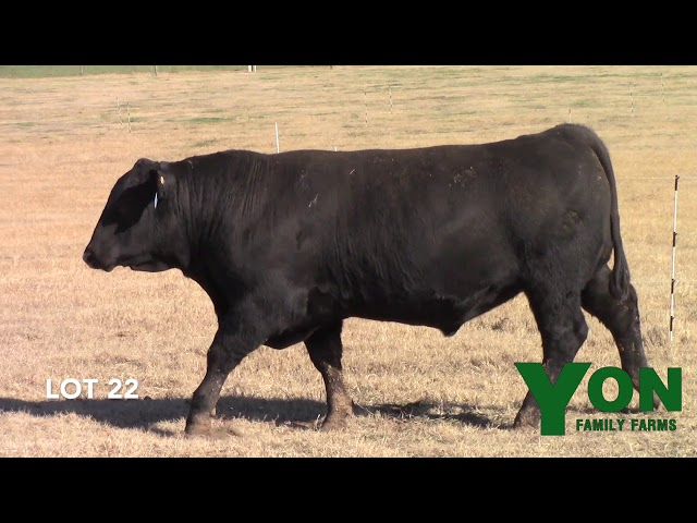 Yon Family Farms Lot 22
