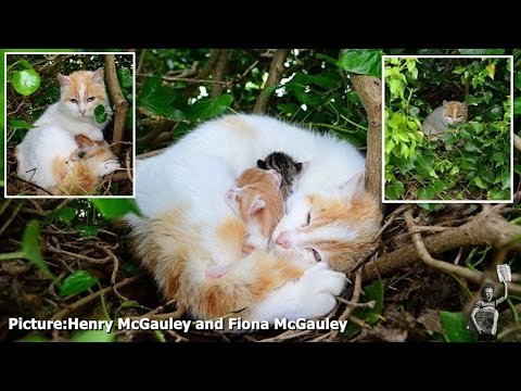 Cat Gives Birth to 4 Kittens in Bird's Nest