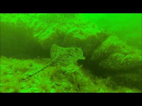 Diving The Falls of Lora, Under the Connel Bridge