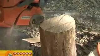 Как свалить дерево (из т.п.