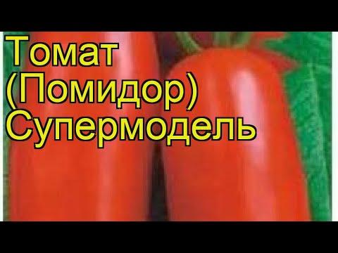 Томат обыкновенный Супермодель. Краткий обзор, описание характеристик, где купить семена