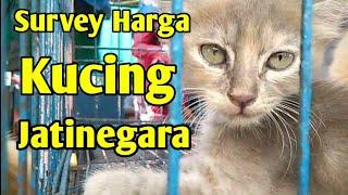 Survey Harga Kucing di Pasar Hewan Jatinegara