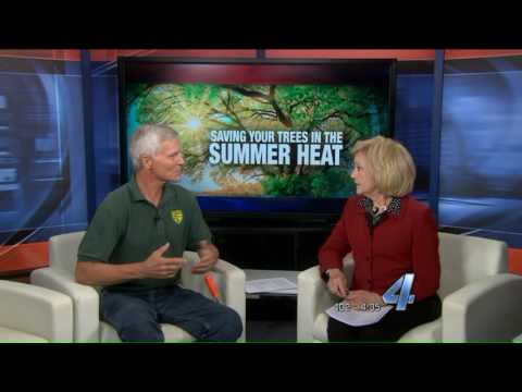 Saving your trees during the hot, summer weather