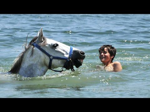Pyreneen Summercamp - horse riding holidays