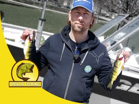 Orillia Perch Festival - Flurries of Spring Perch on the first day of the 37th Annual Perchfest