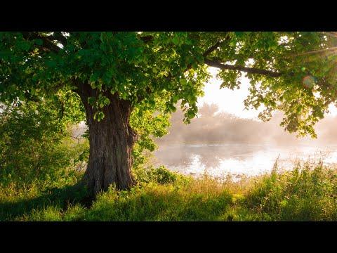 Beautiful Piano Music - Relaxing Music, Study Music, Stress Relief, Sleep Music (Erin)