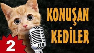Konuşan Kediler 2 - En Komik Kedi Videoları