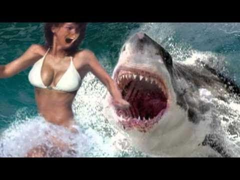Movie Shark Teen 63