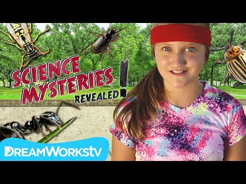 Are Bugs Stronger Than Us? | SCIENCE MYSTERIES REVEALED