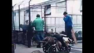 stopp killing dogs in romania stoppt das abschlachten der hunde in rumnien und anderswo