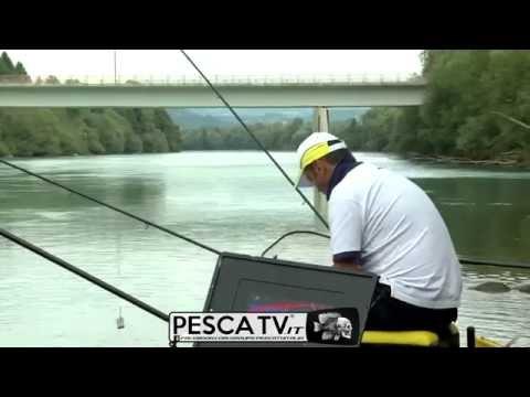 PESCA CON PASTURATORE Sulla Drava Grande, In Austria