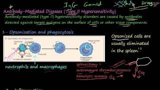 77P - Antibody-Mediated Diseases, Type II Hypersensitivity