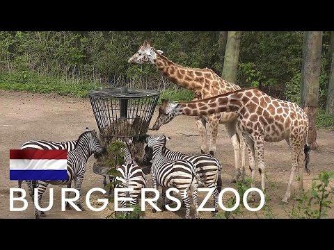 Burgers' Zoo, including Ocean aquarium - Arnhem [HD]