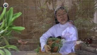 Tình Cha - Lm. Thái Nguyên. Trình bày: Sr. Nguyễn Dự. OP.