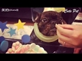IF YOU LAUGH, YOU LOSE Funniest Animal Compilation 2017   Funny Pet Videos