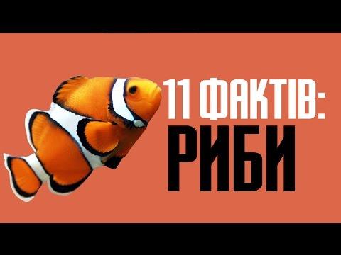 11 цікавих фактів риб та інших морських тварин і жителів