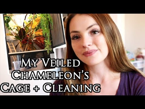 Veiled Chameleon Cage Tour and Cleanup