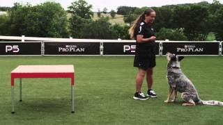 Dog Agility - Pause Table - Competition - Pro Plan P5 Training