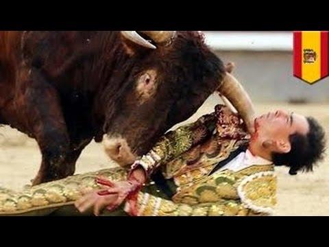 Как выглядит бык