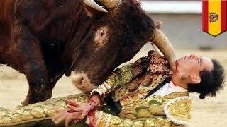 Бык проткнул матадору шею