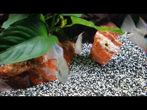 10 Fische für Fortgeschrittene Aquarianer | Aquarium Fische