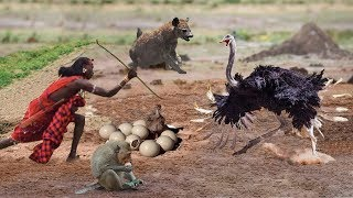 Interesting Ostrich Protect Eggs & Baby From Monkey, Hyena, Human Stealing - Prey Escapes Predato