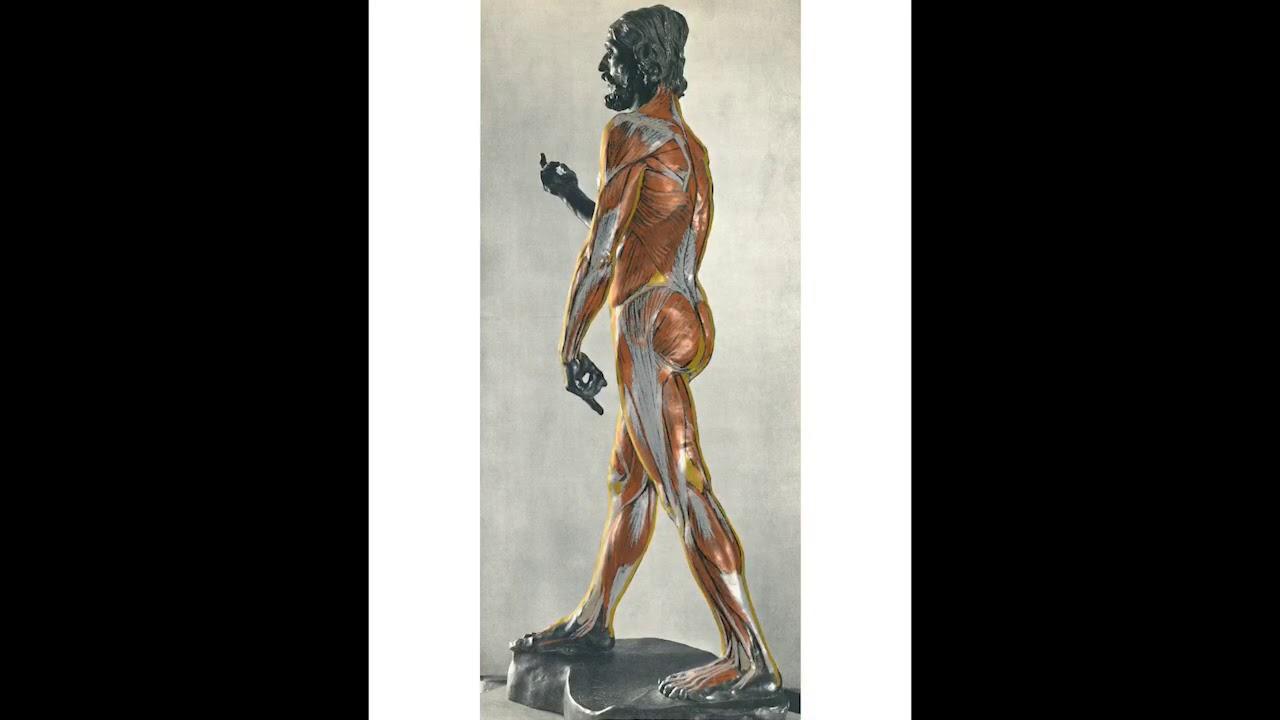 名作から学ぶ美術解剖学3:ロダン彫刻