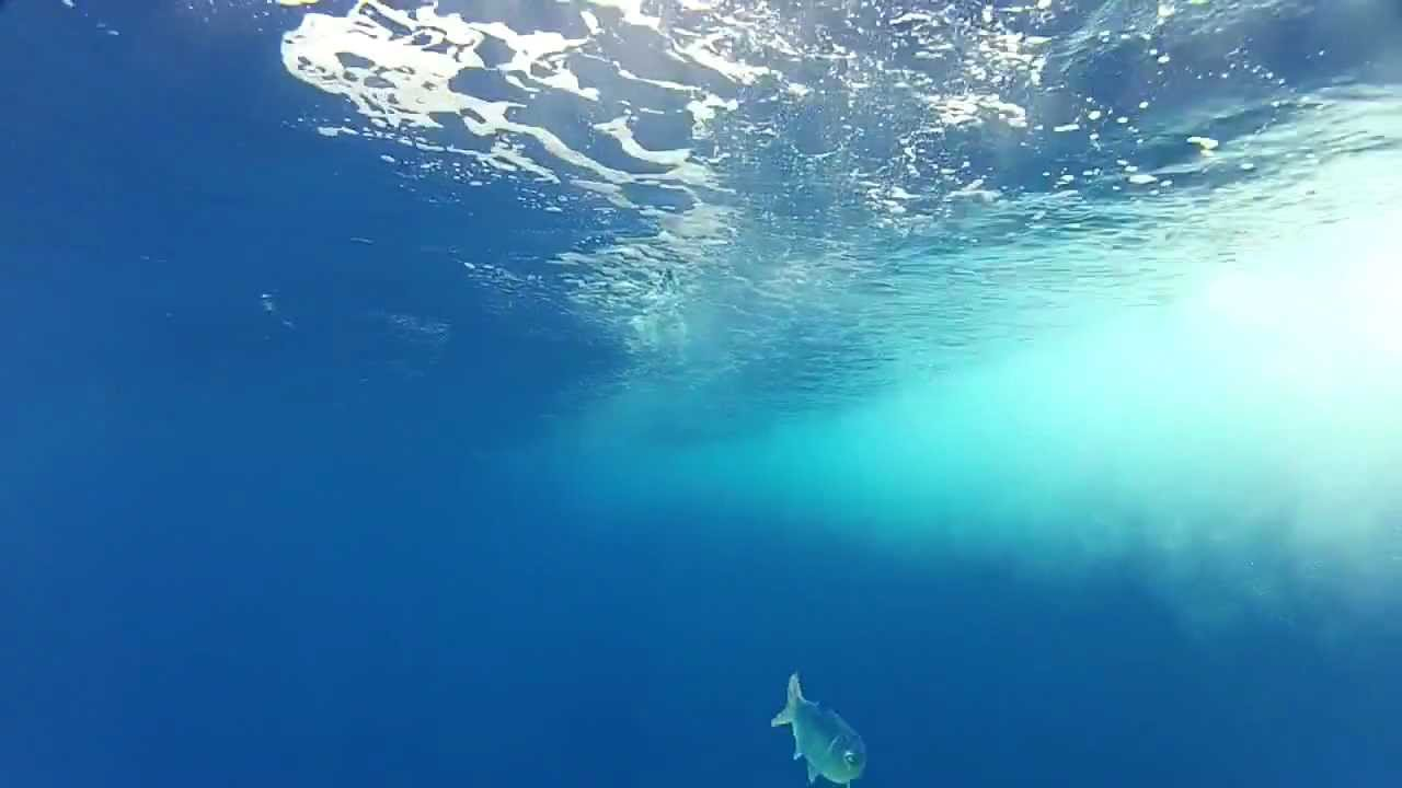 Dolphin fishing 3 29 gopro underwater trolling youtube for Best gopro for fishing