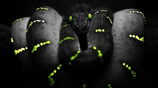 Venomous Snakes | Snake Documentary | National Geographic (Earth Documentaries) Nature Movie