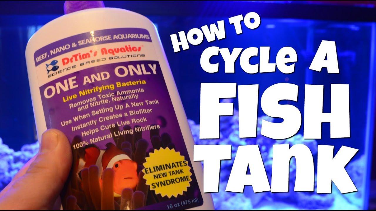 Aquarium fish tank cycle - How To Cycle A Fish Tank