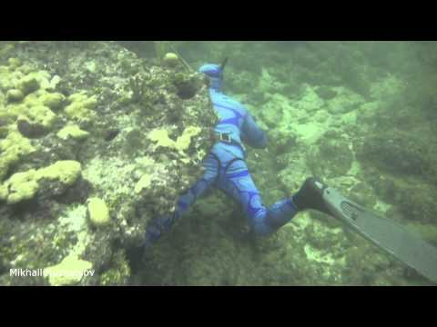 Spearfishing In Miami, Shallows.