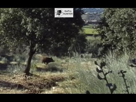 Videos de Jabalies | Monterías en Extremadura
