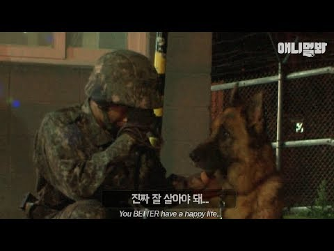 The last story before the retirement of a military working dog who's served the country for 9 years