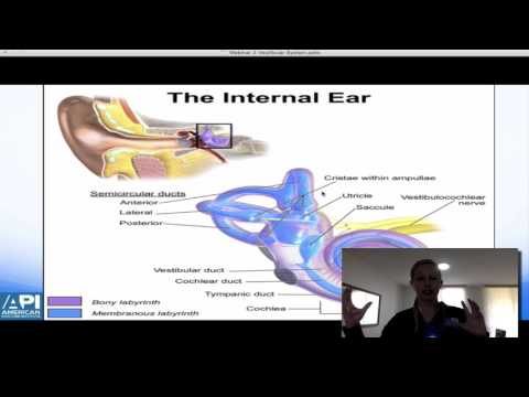 Vestibular  Function in Relation to the Posture System