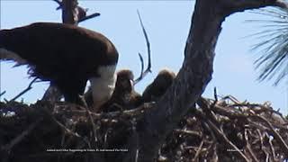 Bald Eagles 1 19 19