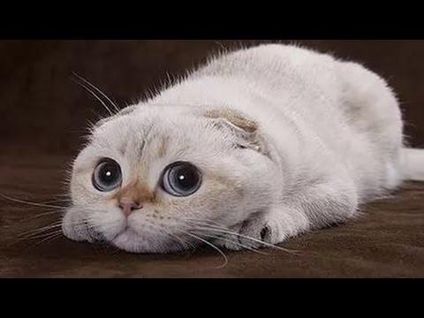 Смешные котики! - YouTube