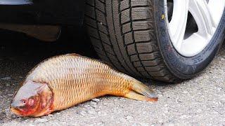 Crushing Crunchy & Soft Things by Car! EXPERIMENT: FISH VS CAR