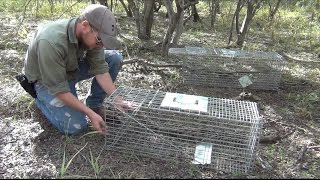 How to Set and Assemble a Humane Large Animal Trap