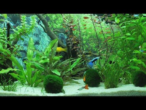 Aquarium 4K