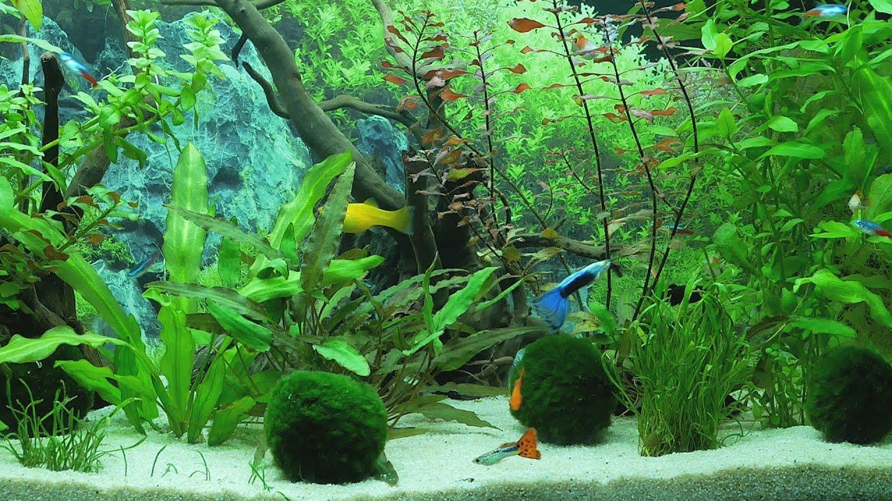 Aquarium 4K - YouTube