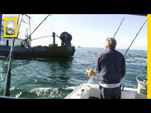 Sustainability: Bluefin Bait | Wicked Tuna