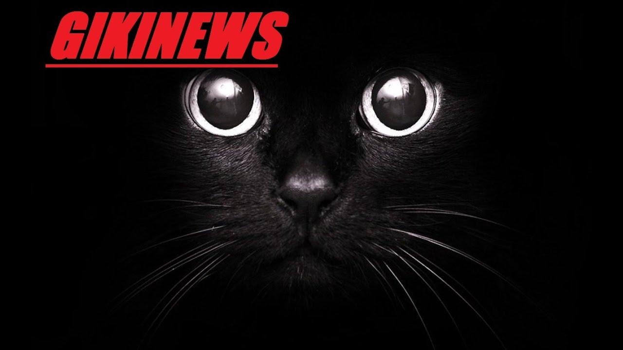 analysis of black cat